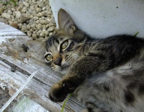 猫の問題行動は縄張りの宣言