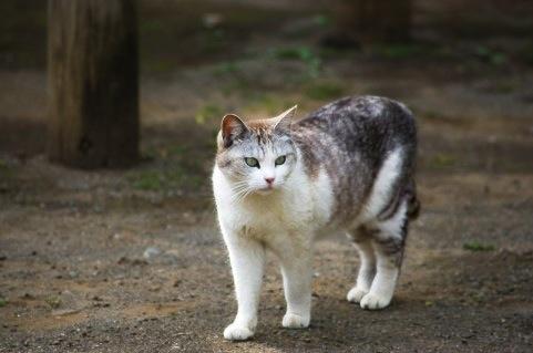 ネコの縄張り意識