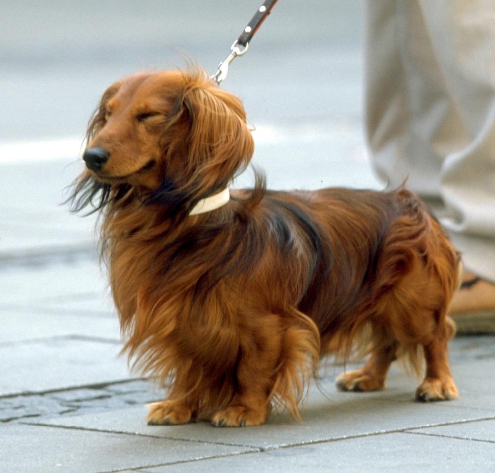 犬とお散歩しよう