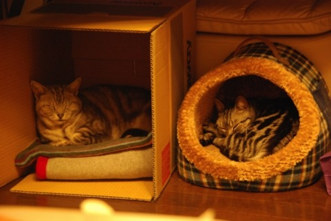 ネコ専用ベッドの必要性