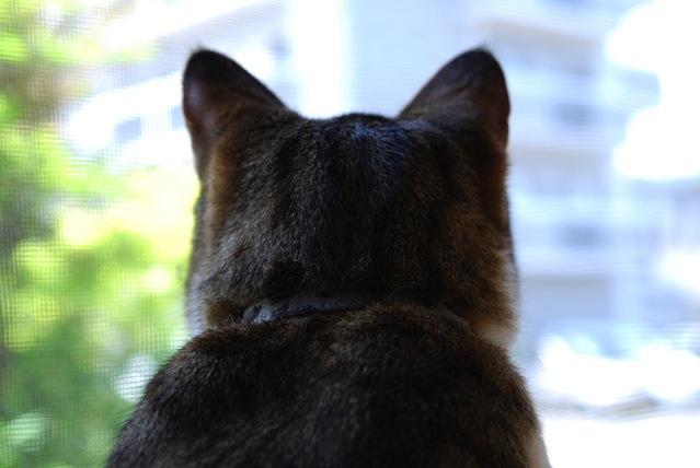 関心があるときのネコの様子