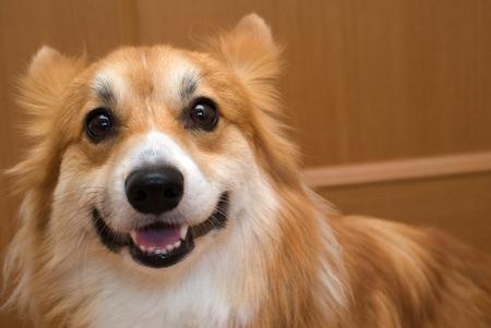 愛犬の健康チェックをしよう