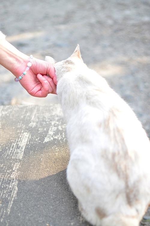 ネコが嫌うなで方