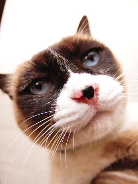 ネコにきつい香りは禁物
