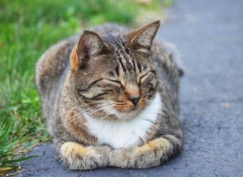 ネコがおびえているとき