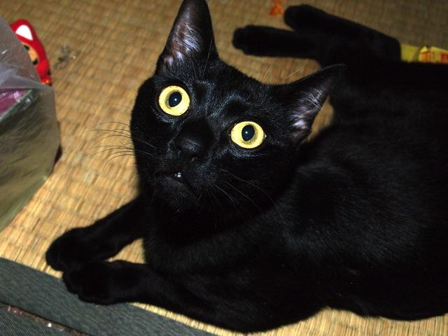 ネコが目を見開き輝かせる