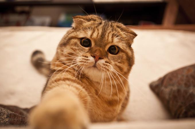 猫が布団の中で足をモミモミする理由の解説