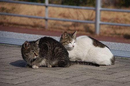 猫の発情期と発情のサイン