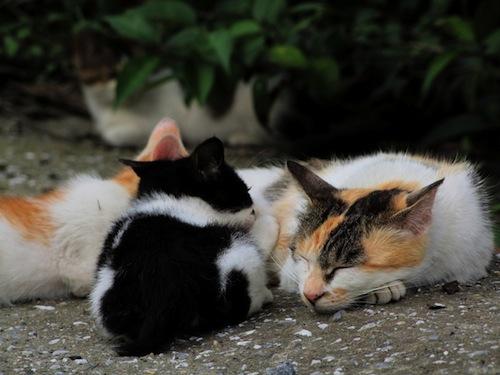 ネコの出産を成功させるコツ