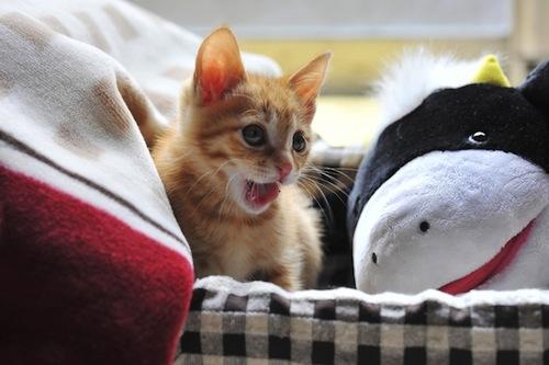ネコの出産、こんな時はどうする?