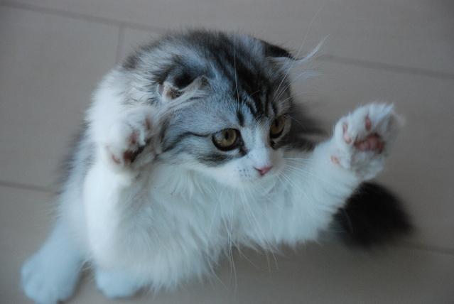 愛猫がイキイキするために