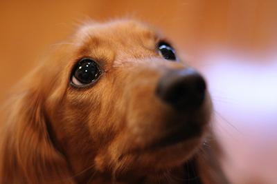 天災の時、愛犬はどうする?