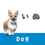 犬の血統書って何に使うの?