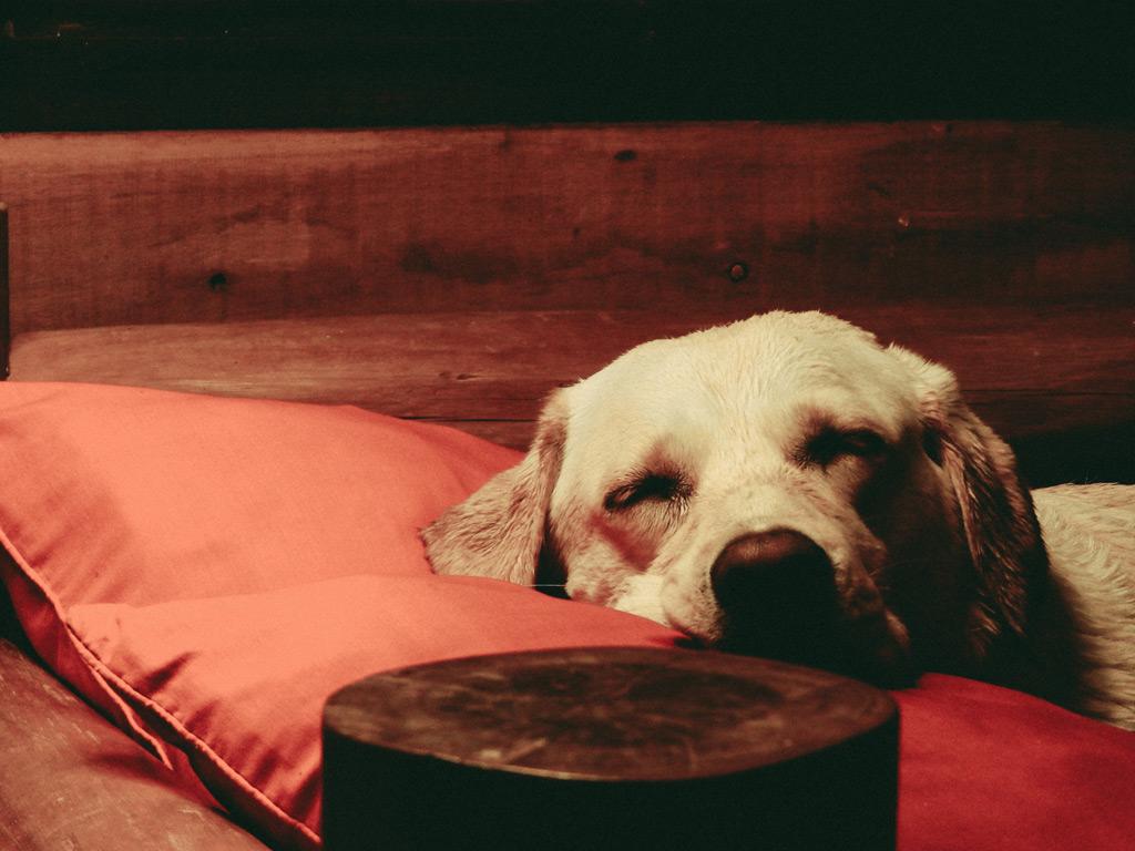 犬にとって睡眠とは?飼い主さんは覚えておきたい愛犬の睡眠からわかる安眠度5項目