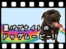 黒パグナイトのドッグムービー【第1作】