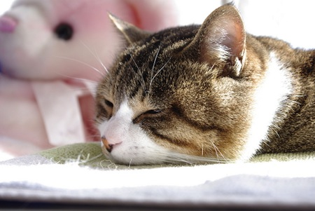 【猫】猫を預ける