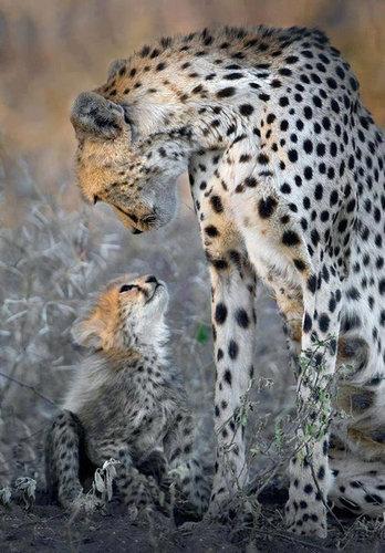 【画像】動物の親子愛