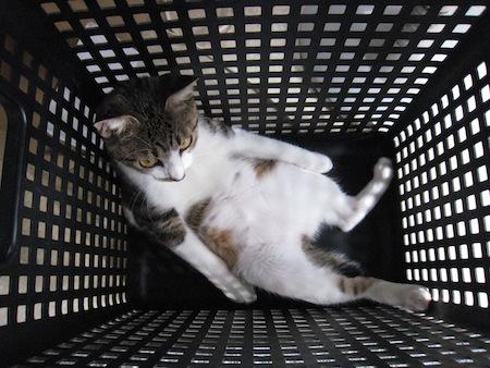 【猫】猫と一緒にお出かけ