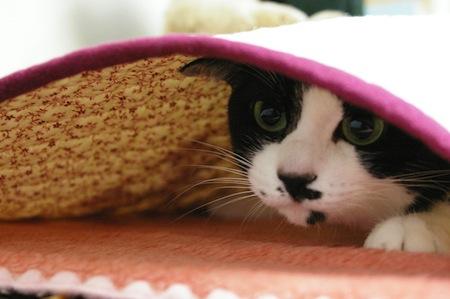 【猫】猫のお留守番