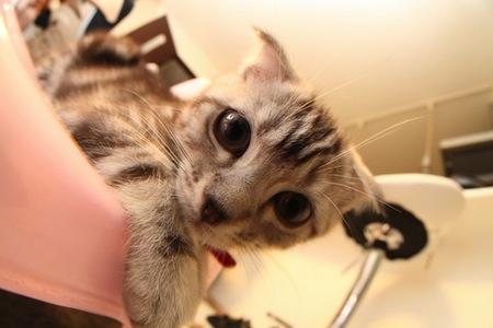 【猫】よい預け先の見分け方