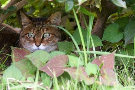 【猫】迷い猫の探し方