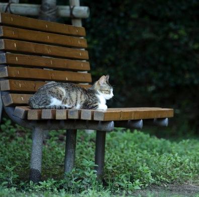 【猫】脱走した猫を見つけた時は?