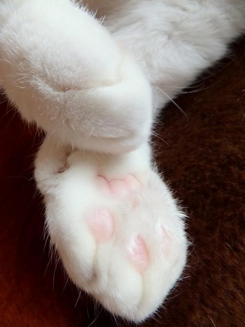猫パンチの意味を知っていますか?