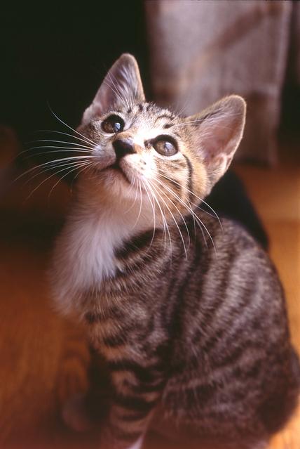 【猫】母を思う子の愛