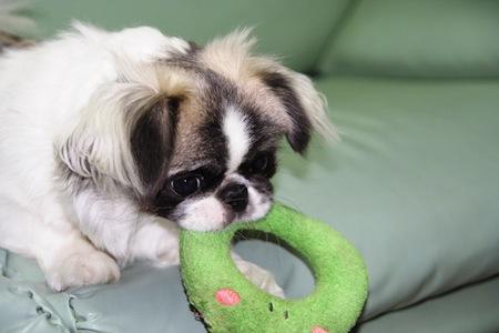 【犬】愛犬を幸せにするコツ