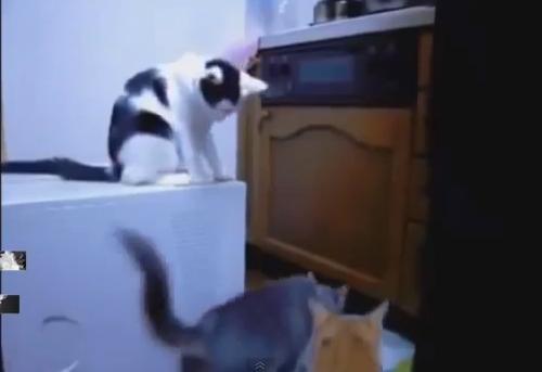 【動画】いたずらが大好きな動物たち(ハプニング集)