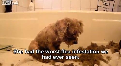 【動画】捨て犬を救助する心暖まる動画です