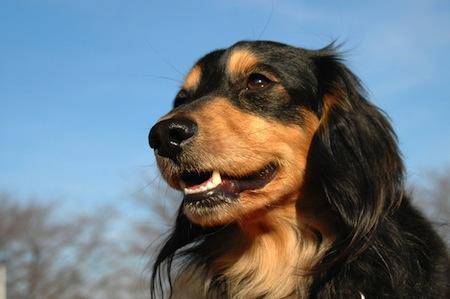 犬の歯と健康