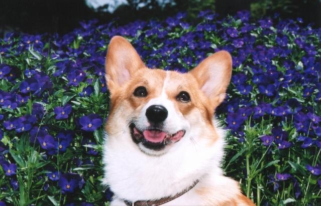 【犬】ホッとして笑顔に