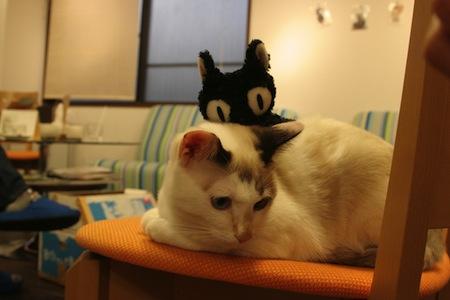 【猫】高齢猫と食事
