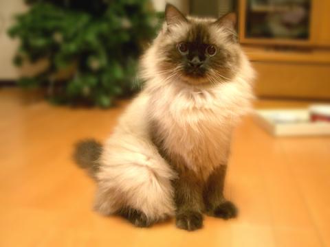 猫の性格を見抜く