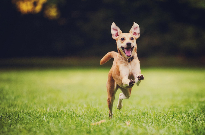 オシッコは健康のバロメーター!愛犬のオシッコから疑われる4つの病気と簡単な予防法