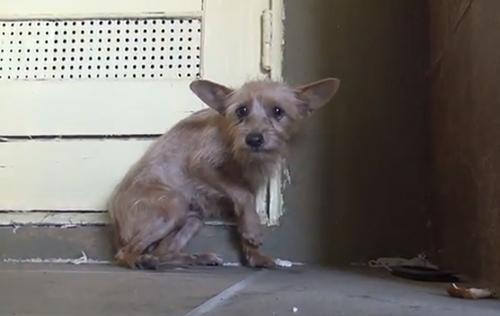 【動画】怯えていた捨て犬が心を開くまでの一部始終