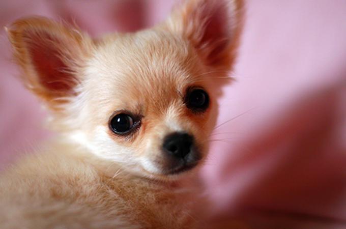 犬が痩せる4つの原因と対策