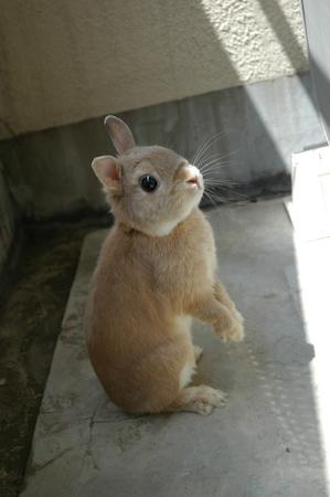 【ウサギ】ウサギの能力徹底追及