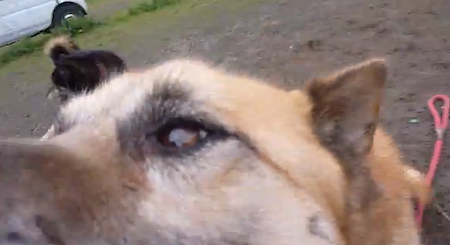 【犬動画】再会