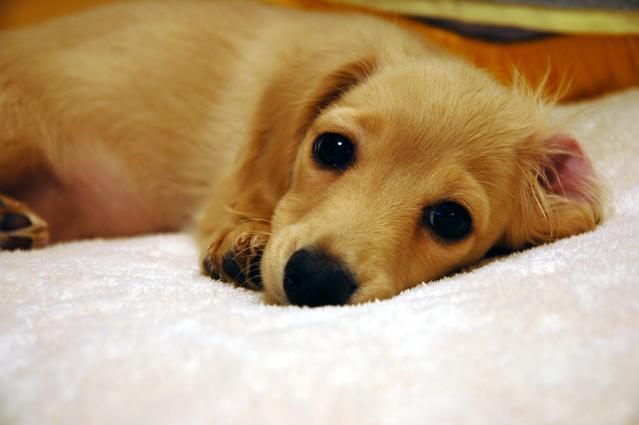 【犬】ごはんとウンチは同じ香り?