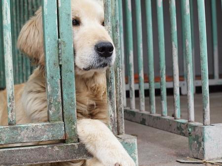 【犬】わんこのストレスケア