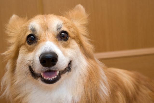 【犬】犬の感情表現