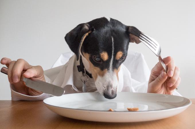 犬のドライフードの食べ過ぎが危険な理由