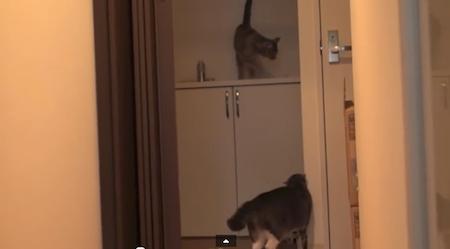【動画】猫の時間がやってきました♪