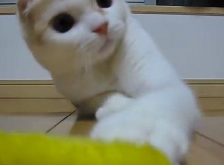 【動画】手のひらサイズの猫ちゃんたち♪