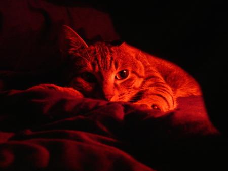 【猫】人目につかない場所に隠れる