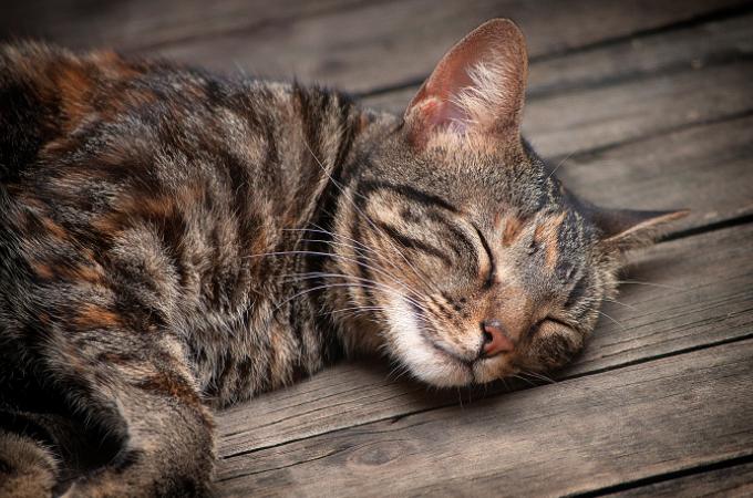 猫が寝る場所でストレス度が分かる?寝床をコロコロ変える猫の心理