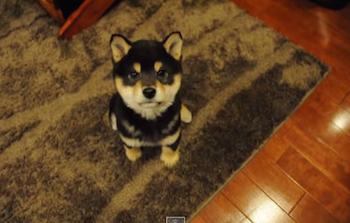 人気の犬動画