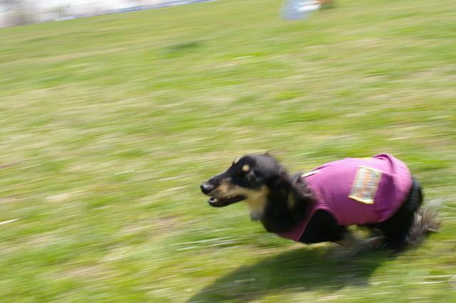 犬のお散歩のQ&A